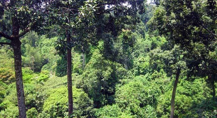 Malaysia Travel Plan - Sepilok, Borneo