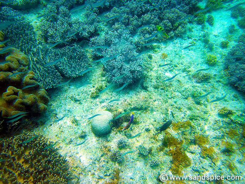 Snorkeling at Alona Beach
