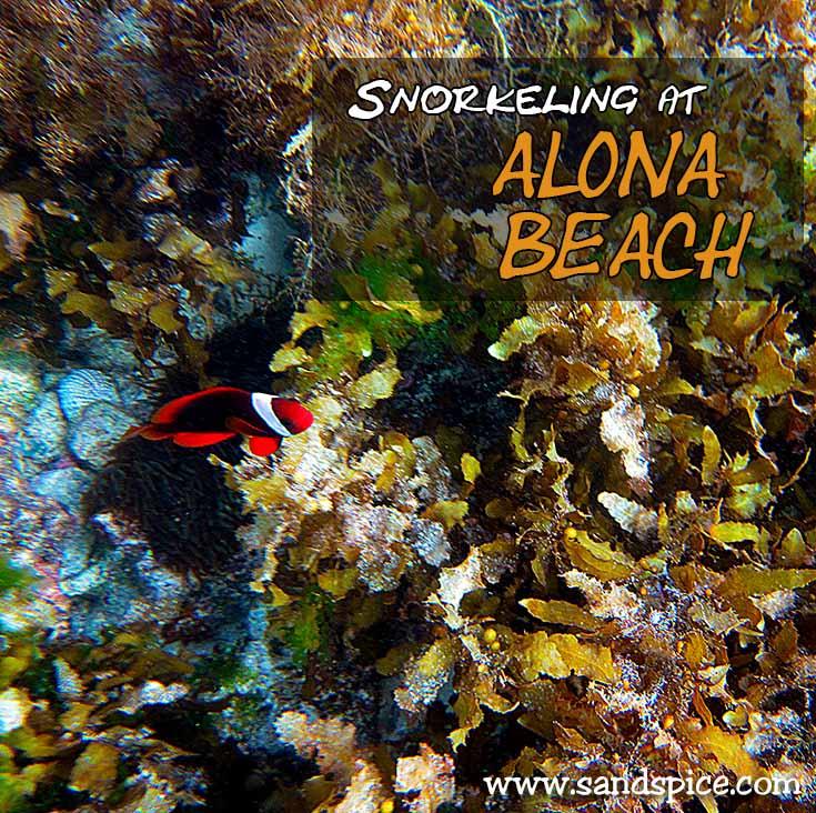 Snorkeling at Alona