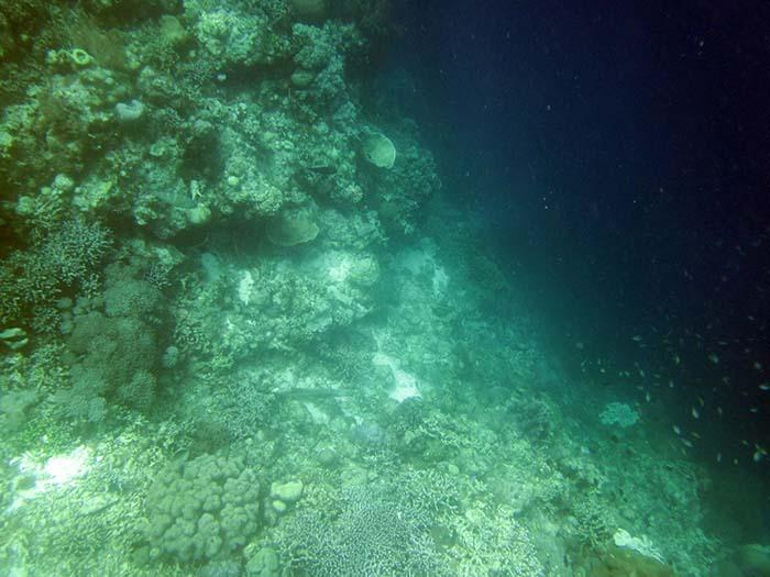 Snorkeling in Moalboal Cebu