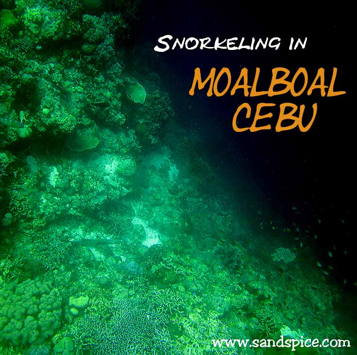 Snorkeling Moalboal Cebu