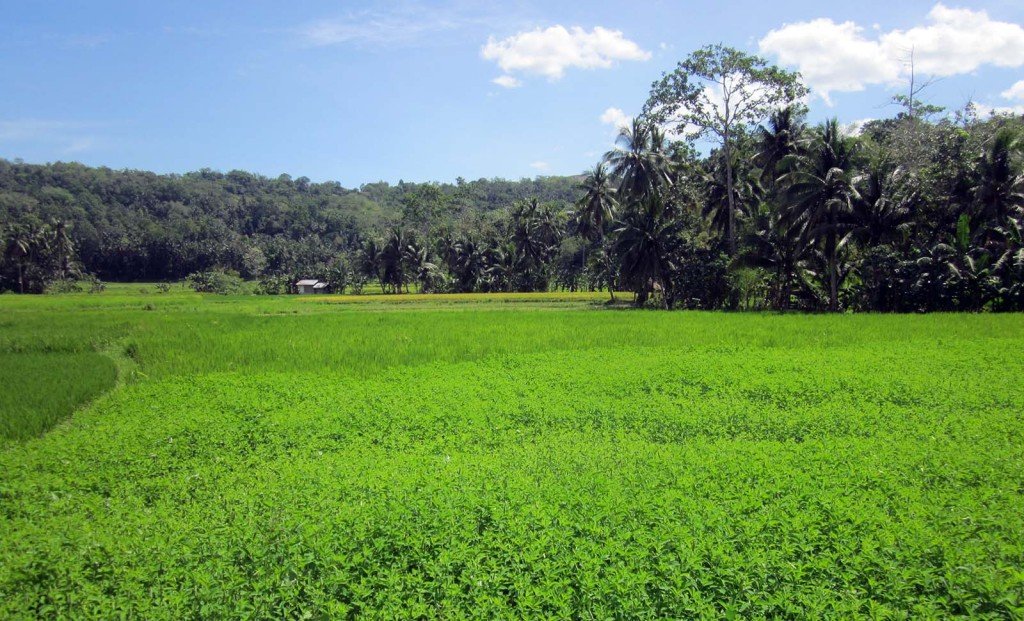What to see and do in Loboc Boho