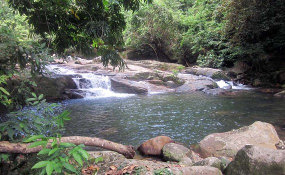 Tioman: Into the Rainforest
