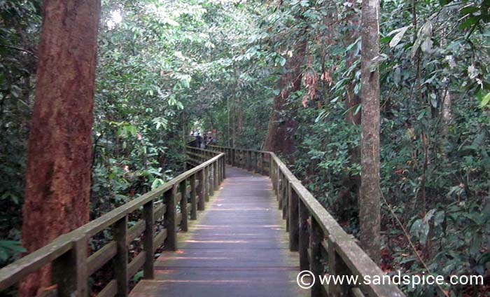 Meet the Borneo apes at Sepilok Orangutan Rehabilitation Center