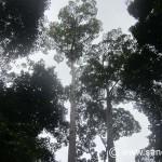Kuala Penyu to Sepilok