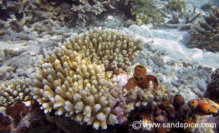 Maldives Under the Reef