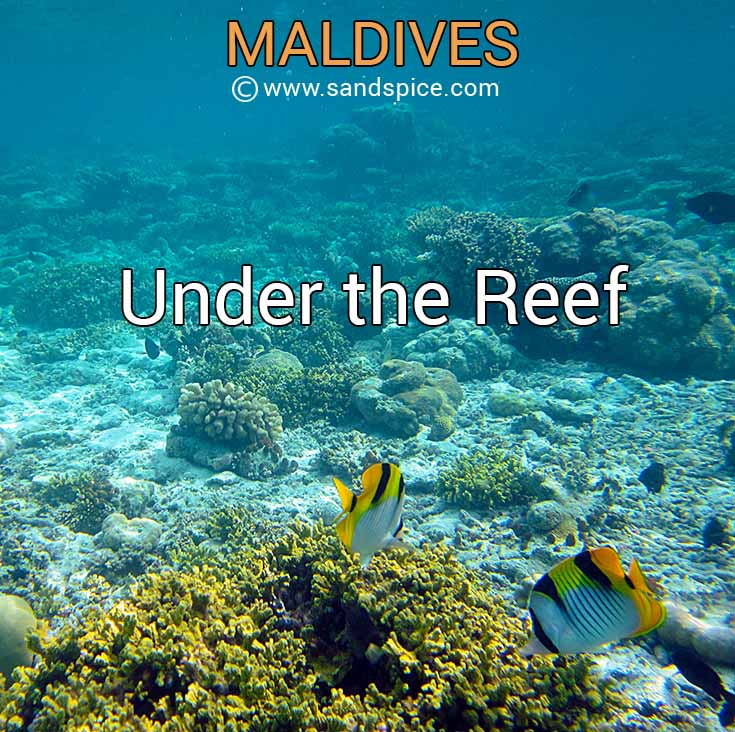 Maldives: Under the Reef