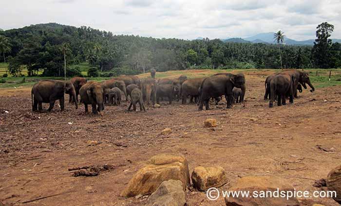 Pinnawala Elephant Orphanage Kandy: A 'circus' that exploits both elephants & tourists