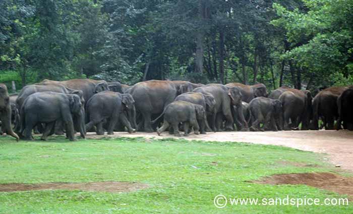 Pinnawala Elephant Orphanage: A 'circus' that exploits both elephants & tourists
