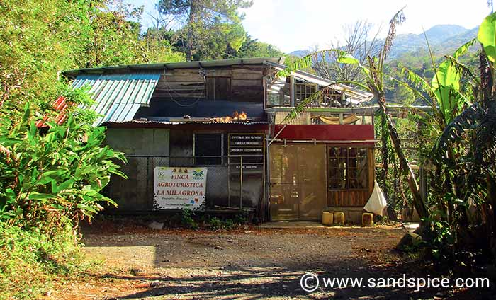 Coffee Tours in Boquete Panama
