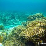 snorkeling at alona beach