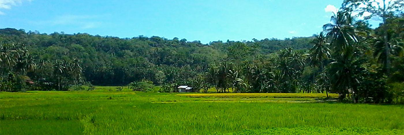 Philippines Central Visayas - Cebu & Bohol