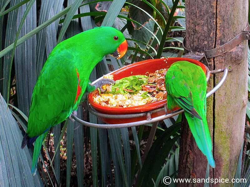 Loro Parque Tenerife - More than just a zoo in Puerto de la Cruz