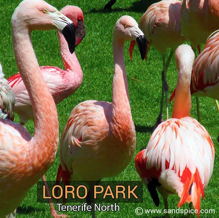 Loro Park Tenerife