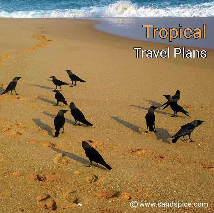 Tropical Travel Plans