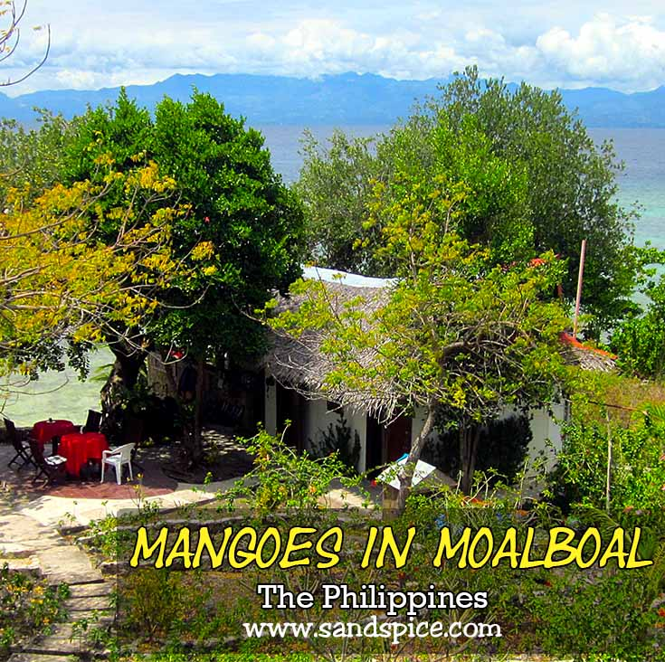 Mangoes Moalboal